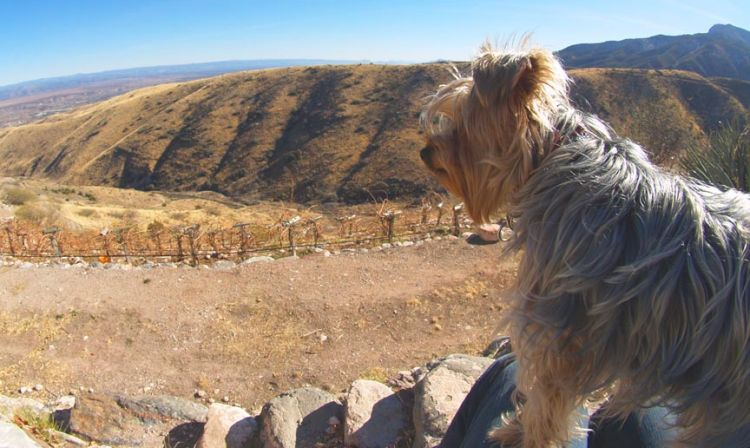 A dog standing on top of a mountain