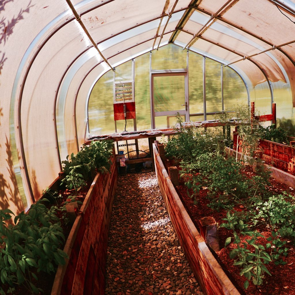 A view of a greenhouse